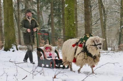 Sheep Christmas Sleigh Ride